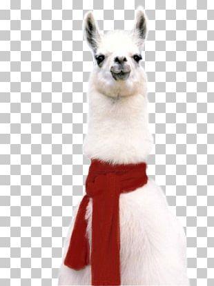Llama T-shirt Alpaca Sticker Hoodie PNG