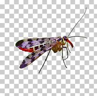 Net-winged Insects Butterfly Insect Wing Pterygota PNG