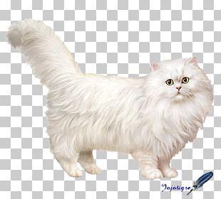Persian Cat Asian Semi-longhair Munchkin Cat American Curl Cymric PNG