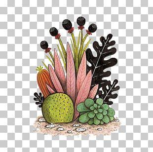 Cactaceae Watercolor Painting Succulent Plant Illustration PNG
