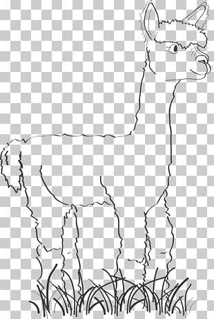 Alpaca Llama Drawing Line Art PNG