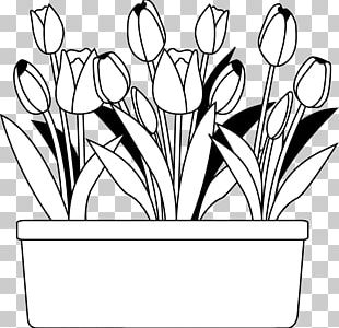 Black And White Flower Monochrome Painting PNG