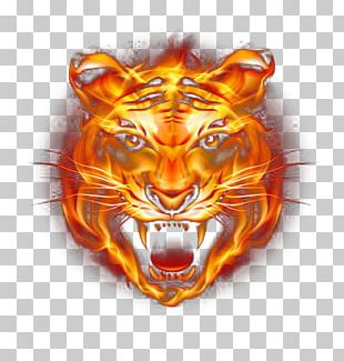 Tiger Fire PNG