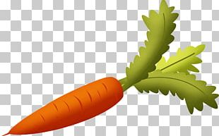 Carrot Vegetable PNG