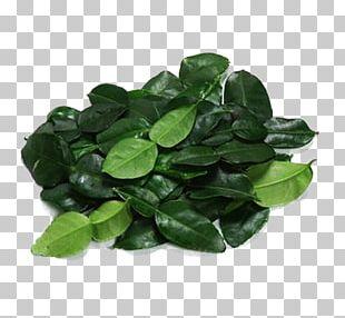 Leaf Lemon Euclidean PNG