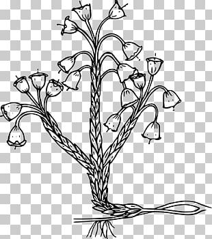 Plant Black And White PNG