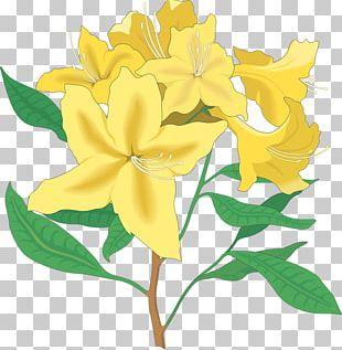 Floral Design Flower Rhododendron PNG