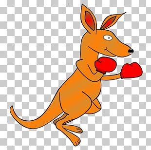 Kangaroo Desktop PNG
