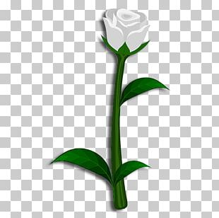 Rose Family Cut Flowers Plant Stem Bud PNG