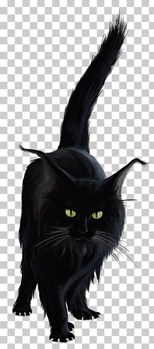 Black Cat Halloween PNG