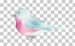 Bird Beak American Sparrows Feather PNG