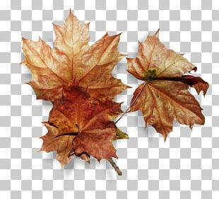 Portable Network Graphics Leaf Autumn PNG