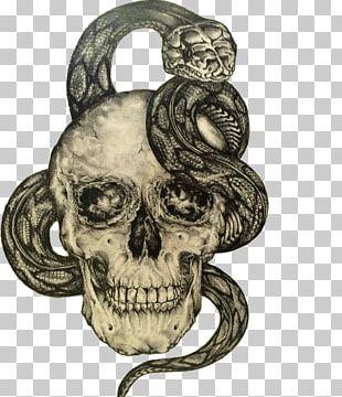 Human Skull Symbolism Drawing Skull Art PNG