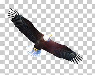 Bald Eagle Vulture PNG