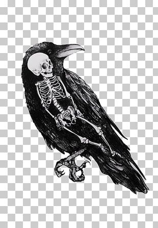 Drawing Crow Black And White Art PNG