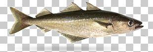 Pollock Milkfish Filet-O-Fish Fishing PNG