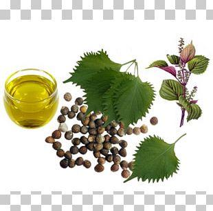 Beefsteak Plant Herb Perilla Oil Sesame PNG