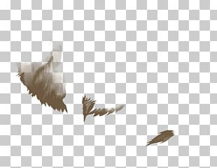Bald Eagle Bird Beak Feather Lion PNG