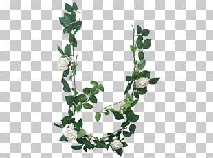 Branch Twig Plant Stem Leaf PNG