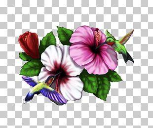Hibiscus Hummingbird Drawing Pinterest PNG