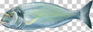 Oily Fish Gilt-head Bream Milkfish Food PNG
