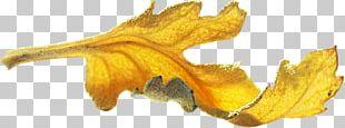 Gold Leaf Gold Leaf PNG
