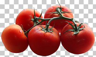 Cherry Tomato Branch Shoot Pruning Leaf PNG