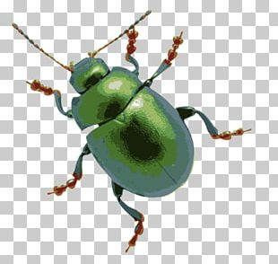 Beetle Stock Photography PNG