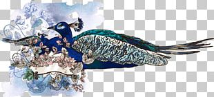 Asiatic Peafowl Illustration PNG
