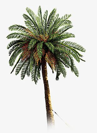 Hand-painted Coconut Trees PNG