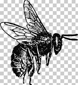 Honey Bee Lip Balm Bee Pollen PNG