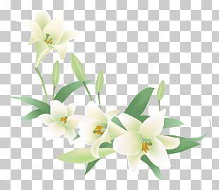 Flower Jasmine Plant Clip Art, PNG, 1440x3575px, Flower, Digital Image,  Flowering Plant, Jasmine, Petal Download Free