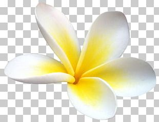 Flower Petal Desktop Plant PNG