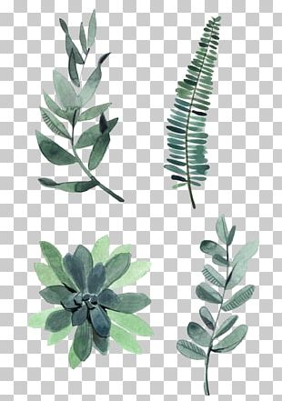 Watercolor Painting Drawing Plant Illustration PNG