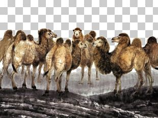 Camel Chinese Painting Art PNG