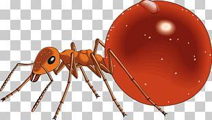 Honeypot Ant PNG