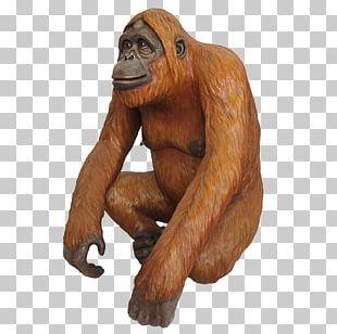 Gorilla Chimpanzee Orangutan Primate Monkey PNG