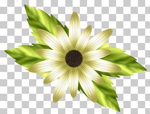 Petal Lilium White Flower PNG