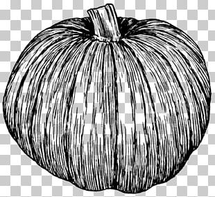 Pumpkin Pie Zucchini Drawing PNG