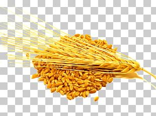 Barley Cereal Food Wheat Groat PNG