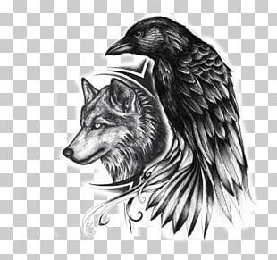 Common Raven Indian Wolf Tattoo Drawing PNG
