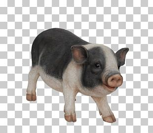 Domestic Pig Snout PNG