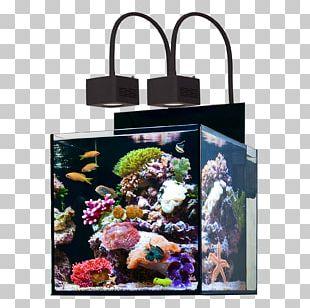 Reef Aquarium Protein Skimmer Sump Water PNG