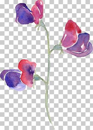 Sweet Pea Watercolor Painting Flowers In Watercolor PNG