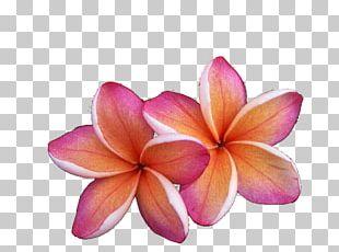 Kauai Hilo Flora National Tropical Botanical Garden Fauna PNG