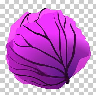 Red Cabbage Lettuce PNG
