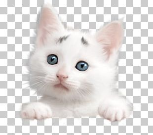 Whiskers American Wirehair Turkish Van Khao Manee Turkish Angora PNG