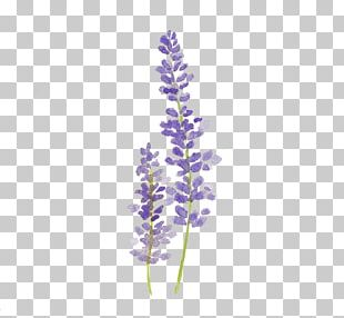 Watercolor Painting Lavender Drawing Watercolour Flowers PNG