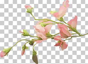 Cut Flowers Floral Design Bud Plant Stem PNG