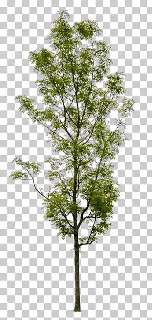 Askur Tree Shrub Artificial Flower Trunk PNG